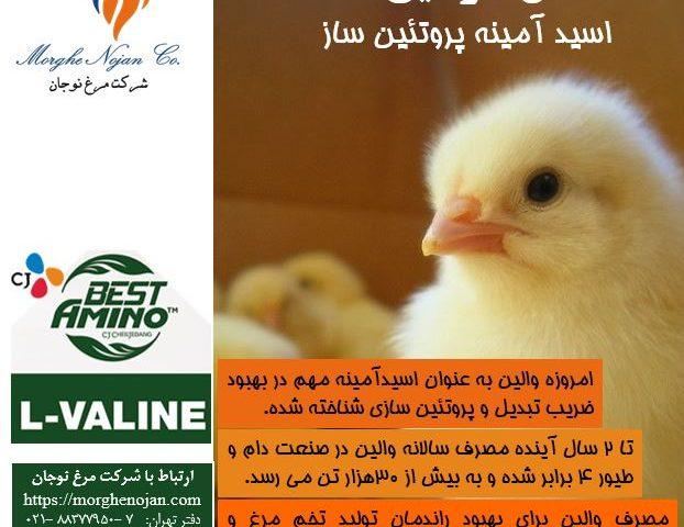 ال-والین : اسیدآمینه پروتئین ساز در طیور