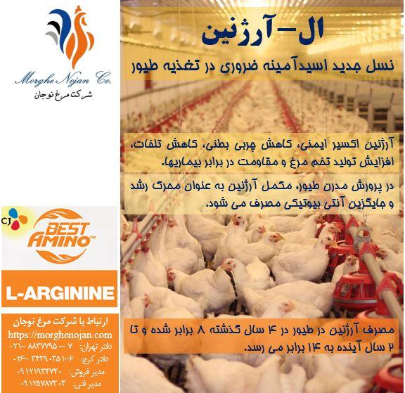 ال-آرژنین: نسل جدید اسیدآمینه ضروری در تغذیه طیور